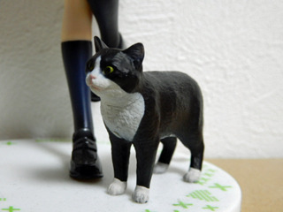 armed cat